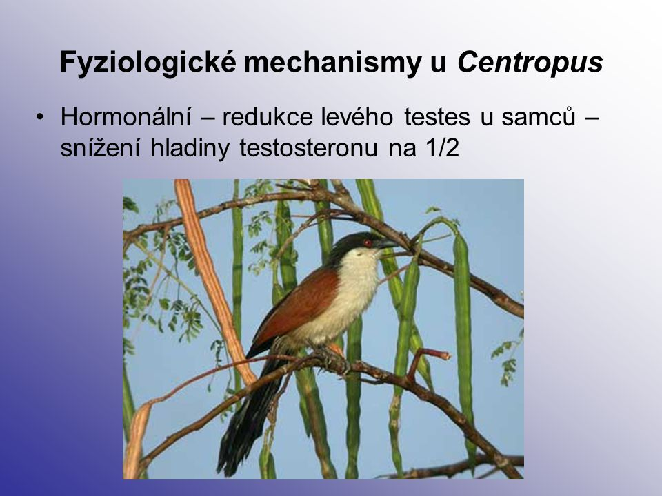 Fyziologické mechanismy u Centropus