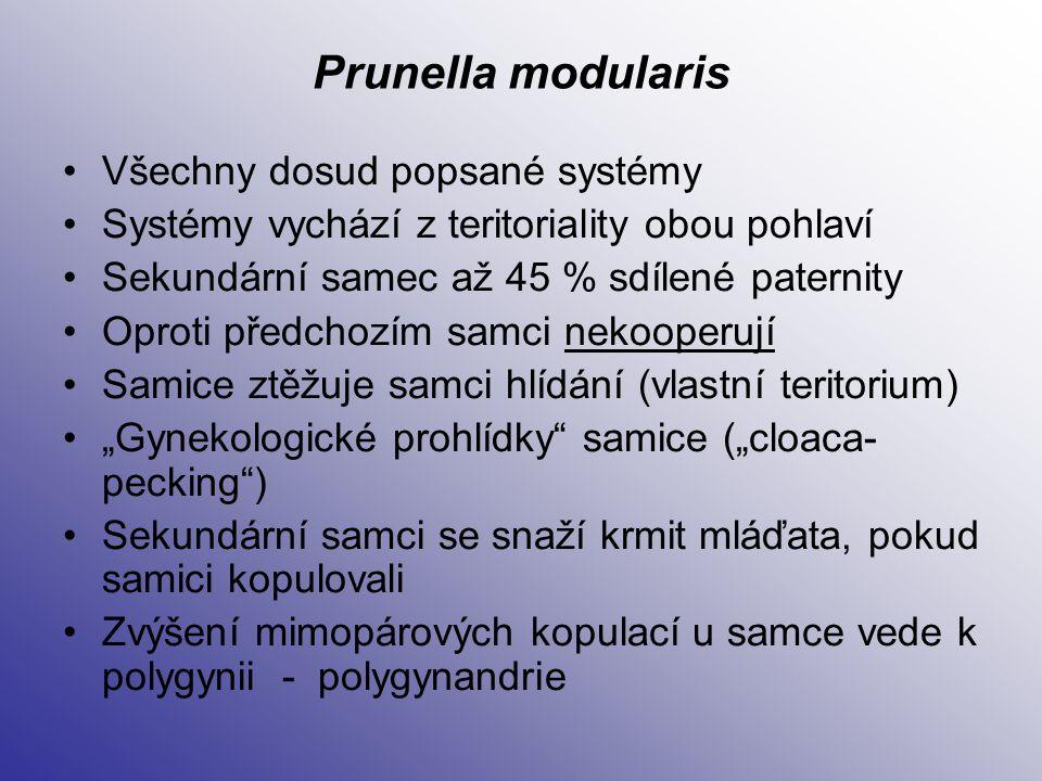 Prunella modularis Všechny dosud popsané systémy