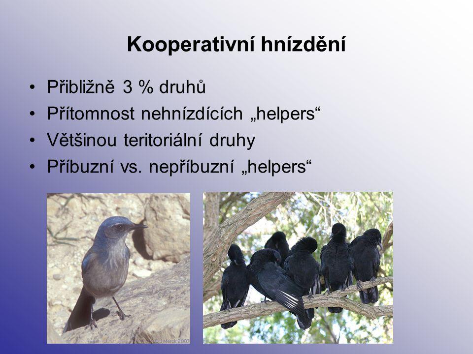Kooperativní hnízdění