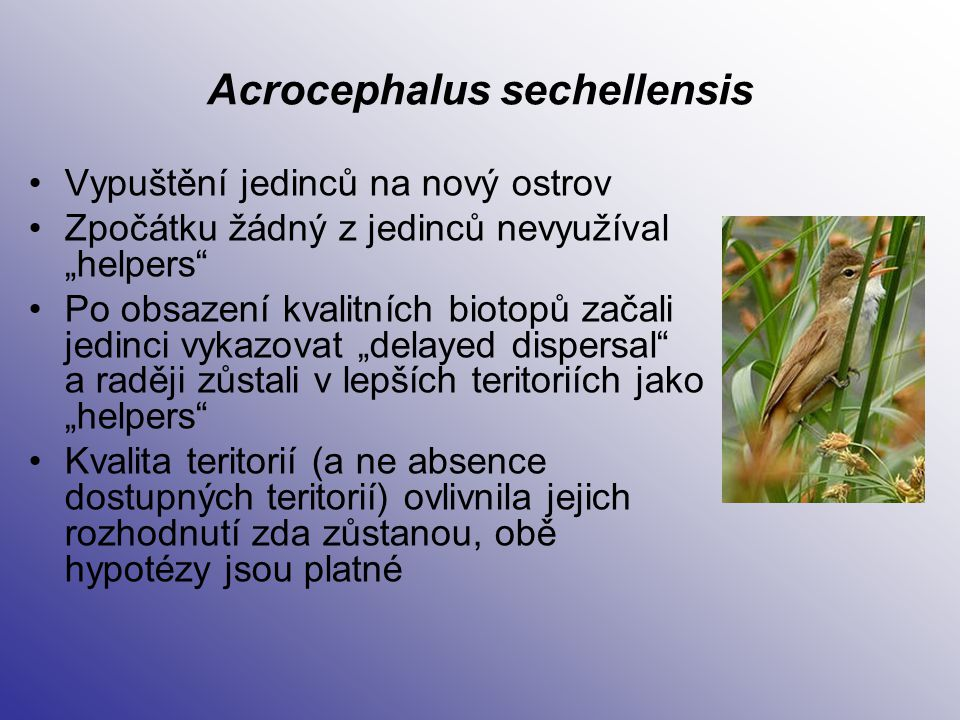 Acrocephalus sechellensis
