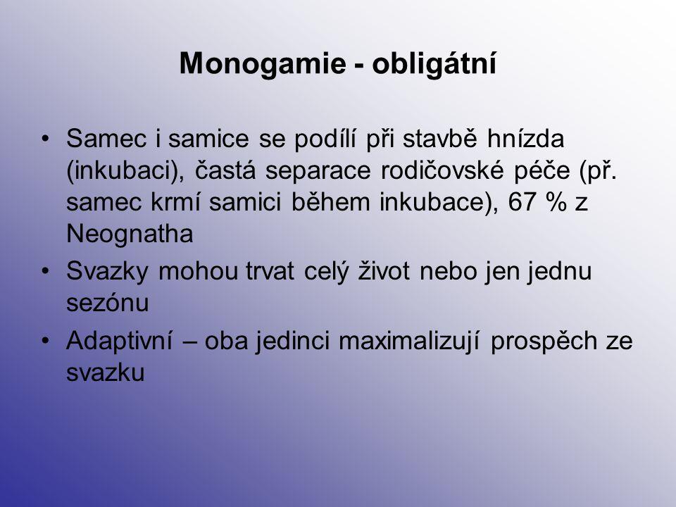 Monogamie - obligátní