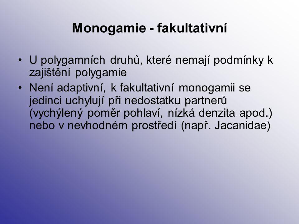 Monogamie - fakultativní