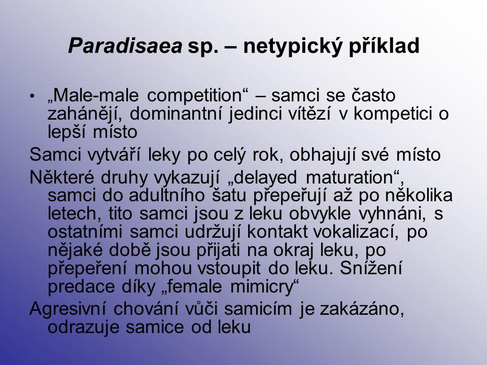 Paradisaea sp. – netypický příklad