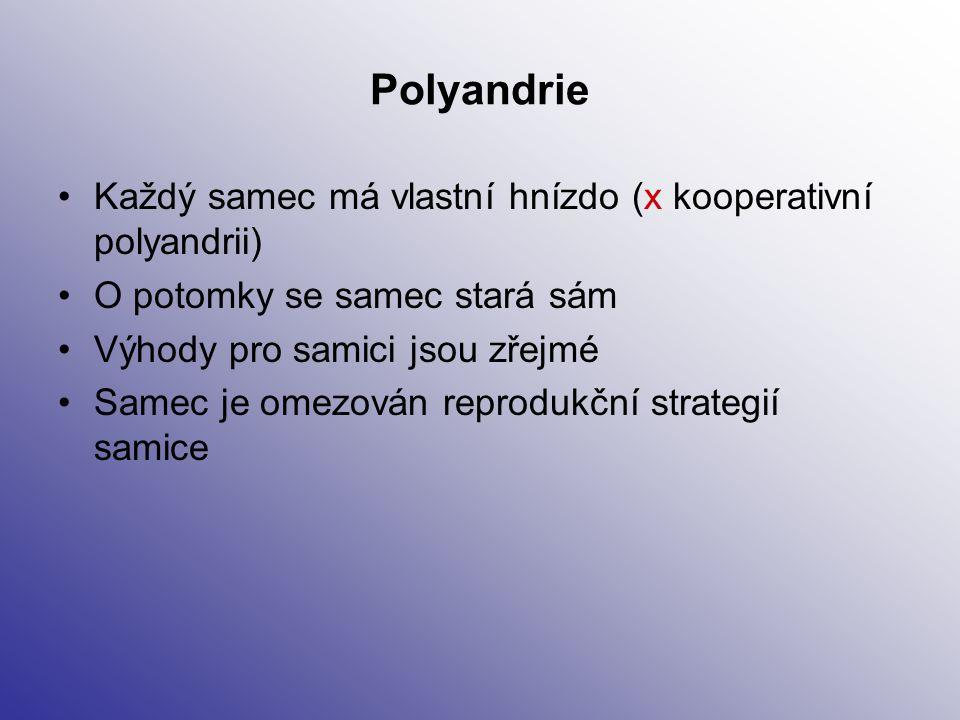 Polyandrie Každý samec má vlastní hnízdo (x kooperativní polyandrii)