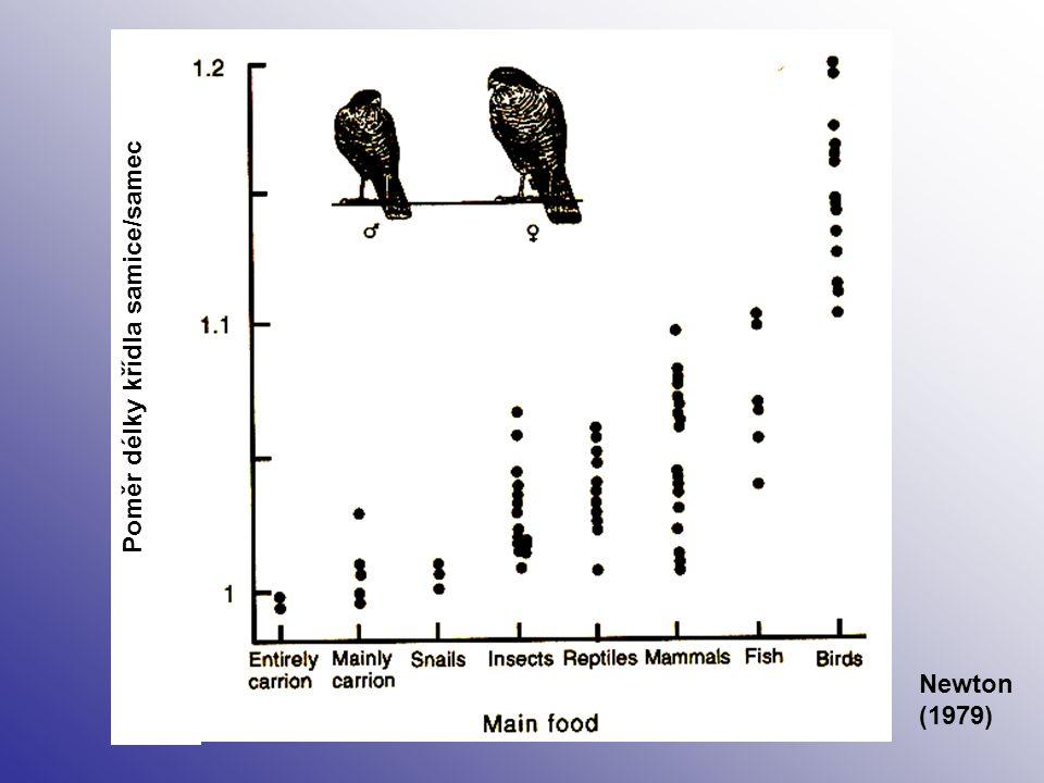 Poměr délky křídla samice/samec