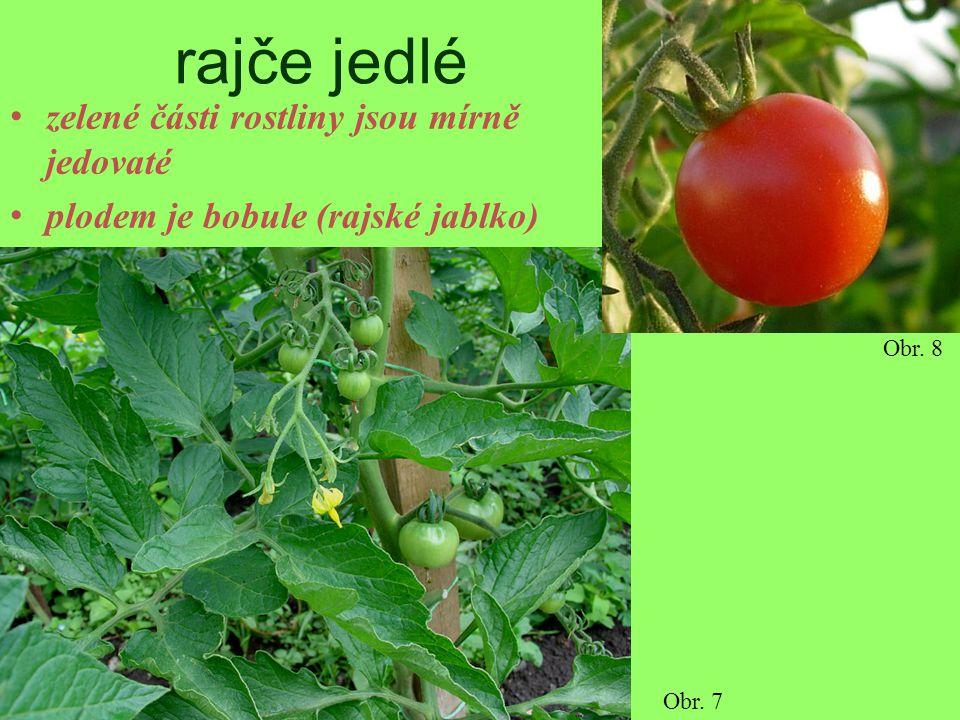 rajče jedlé zelené části rostliny jsou mírně jedovaté