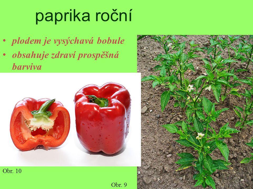 paprika roční plodem je vysýchavá bobule