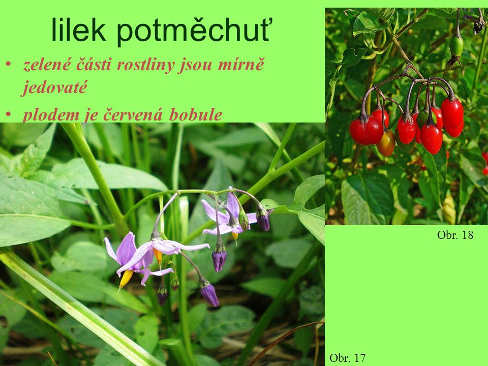 lilek potměchuť zelené části rostliny jsou mírně jedovaté