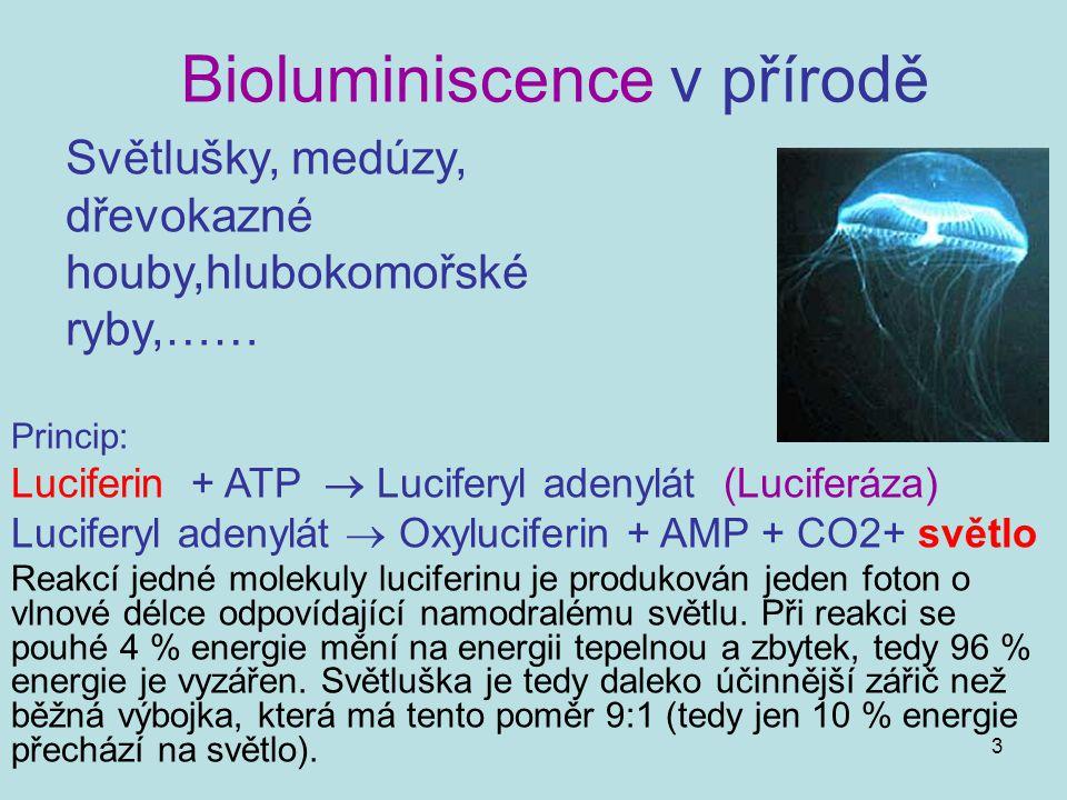 Bioluminiscence v přírodě