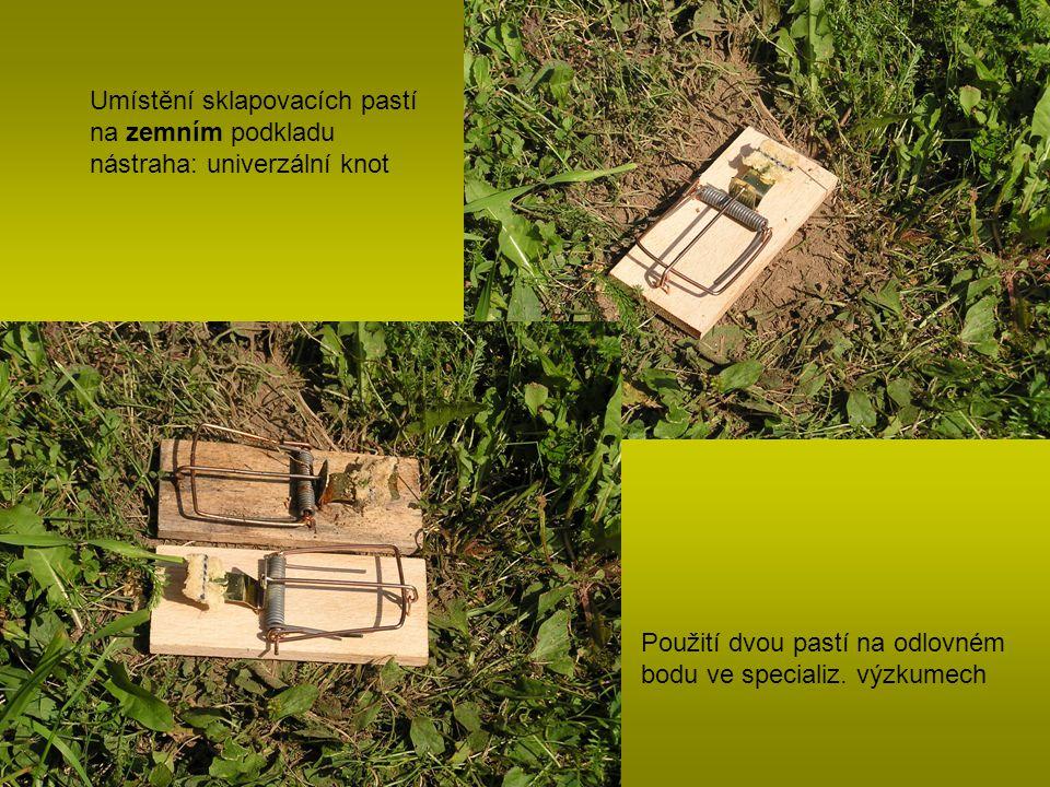 Umístění sklapovacích pastí na zemním podkladu nástraha: univerzální knot