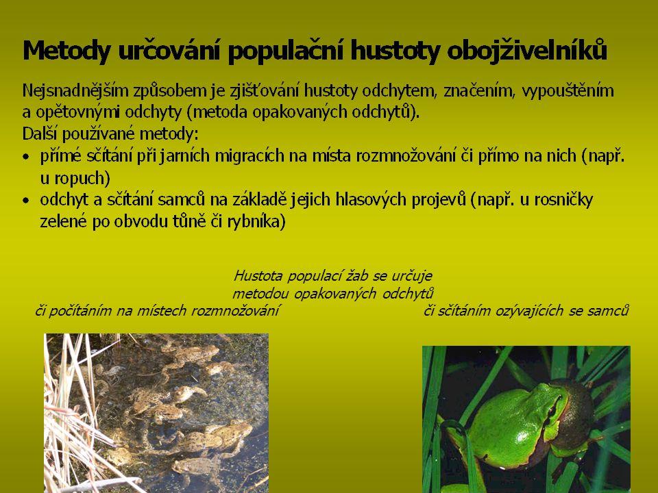 Hustota populací žab se určuje metodou opakovaných odchytů