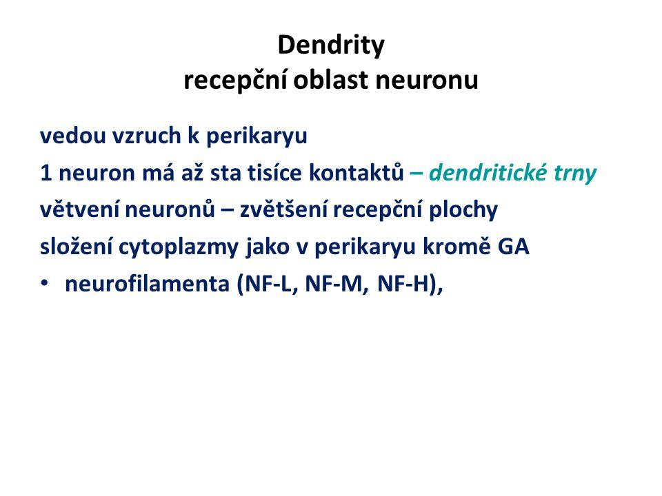 Dendrity recepční oblast neuronu