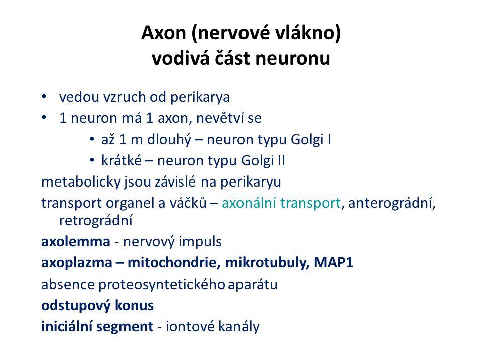 Axon (nervové vlákno) vodivá část neuronu