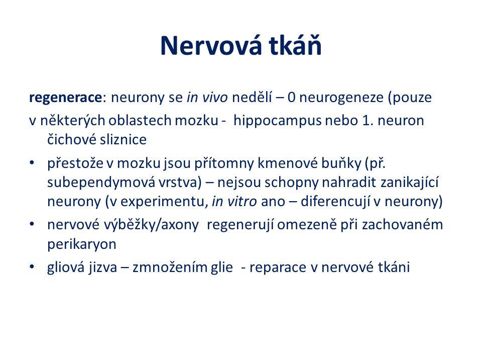 Nervová tkáň regenerace: neurony se in vivo nedělí – 0 neurogeneze (pouze.