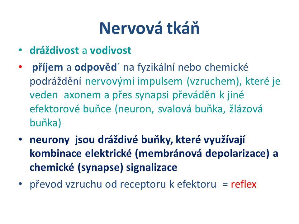 Nervová tkáň dráždivost a vodivost