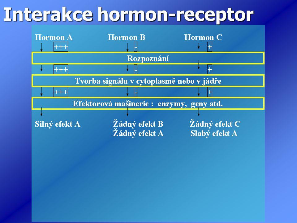 Interakce hormon-receptor