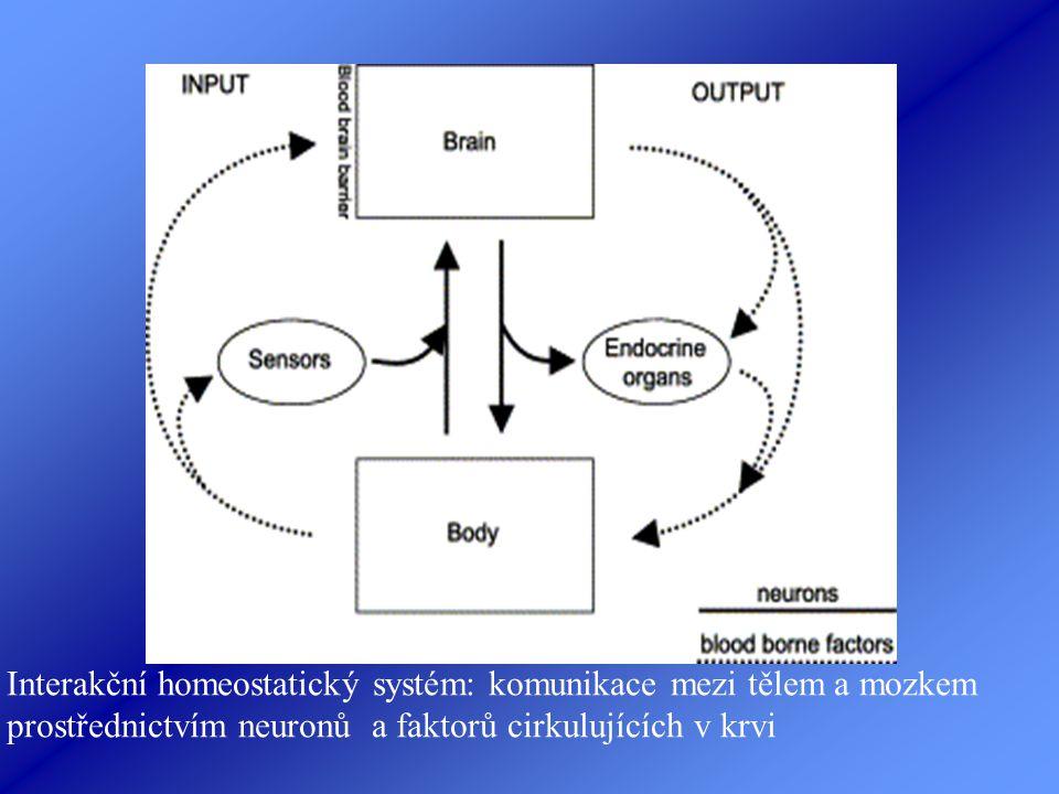 Interakční homeostatický systém: komunikace mezi tělem a mozkem prostřednictvím neuronů a faktorů cirkulujících v krvi