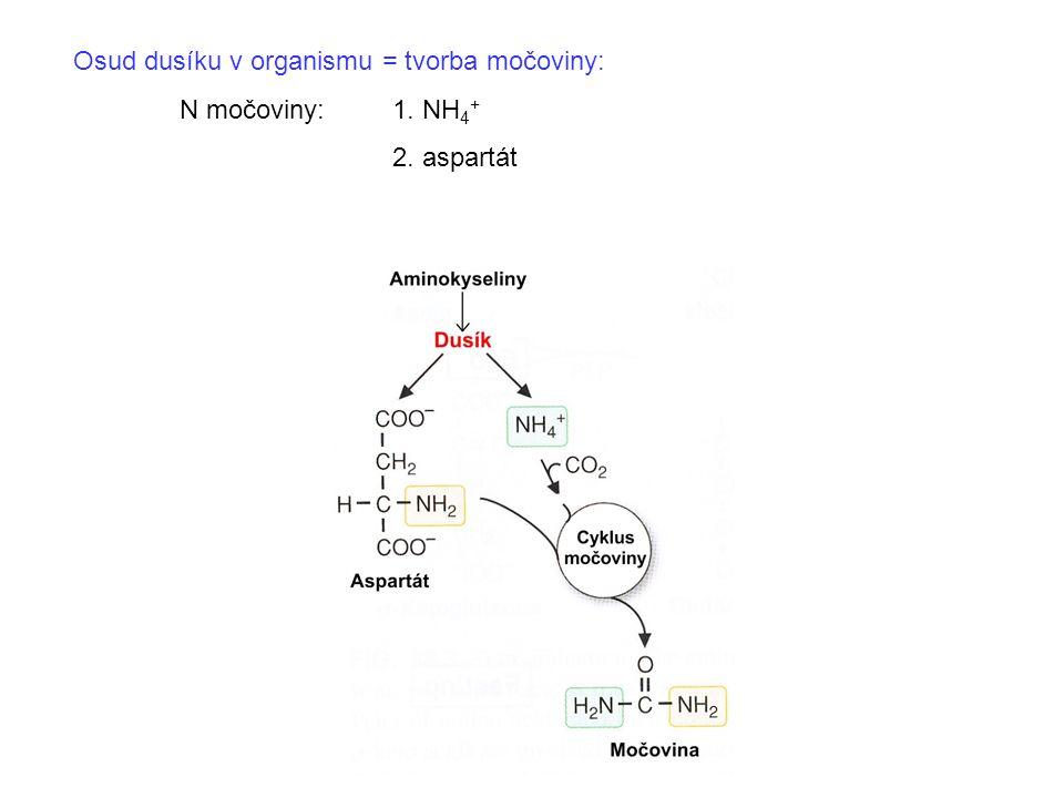 Osud dusíku v organismu = tvorba močoviny: