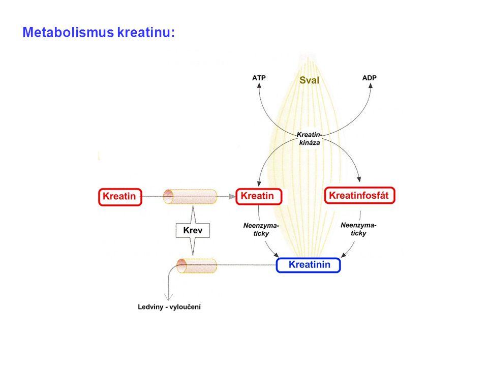 Metabolismus kreatinu: