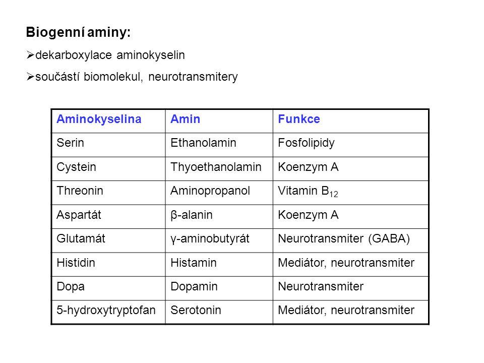 Biogenní aminy: dekarboxylace aminokyselin
