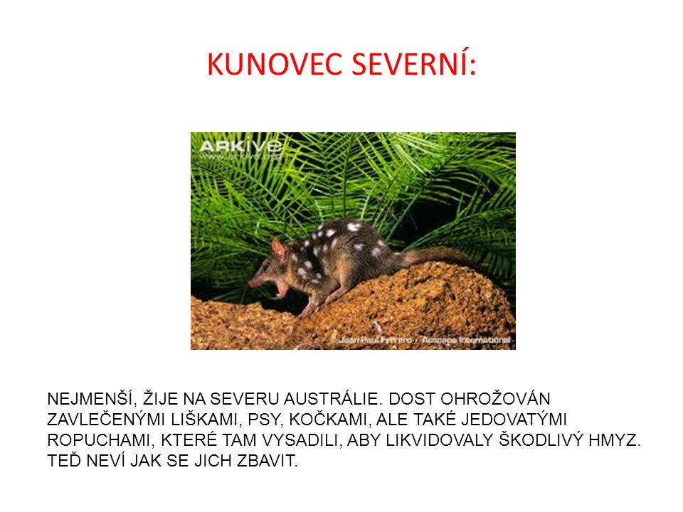 KUNOVEC SEVERNÍ: