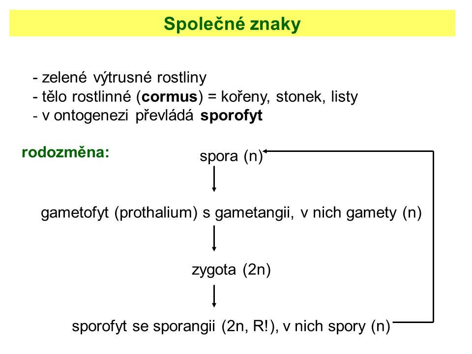 Společné znaky - zelené výtrusné rostliny