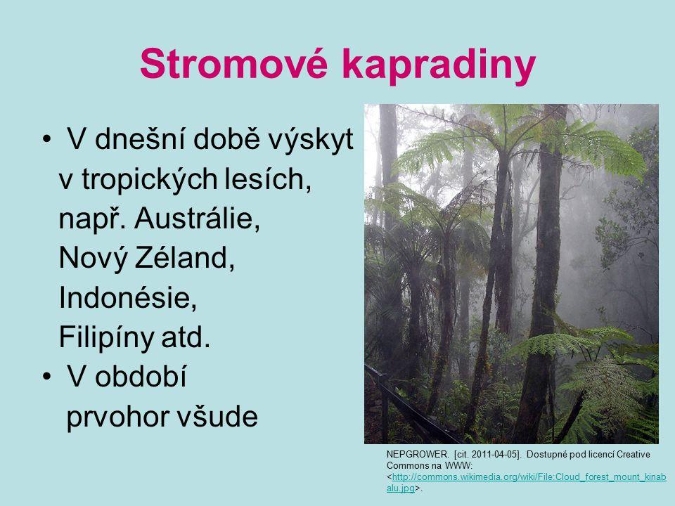 Stromové kapradiny V dnešní době výskyt v tropických lesích,