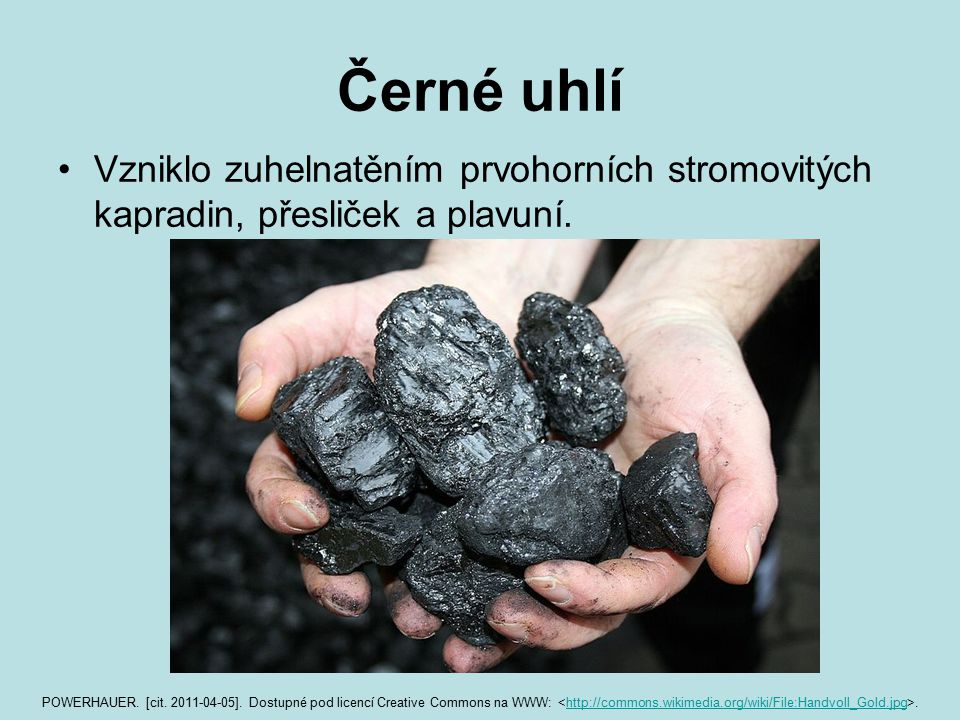 Černé uhlí Vzniklo zuhelnatěním prvohorních stromovitých kapradin, přesliček a plavuní.