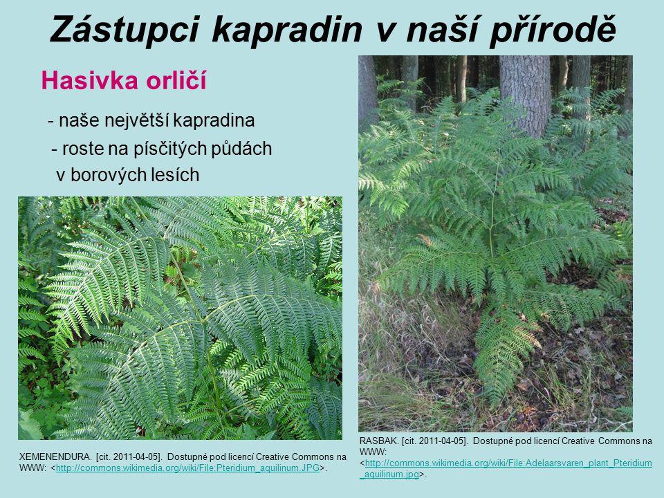Zástupci kapradin v naší přírodě