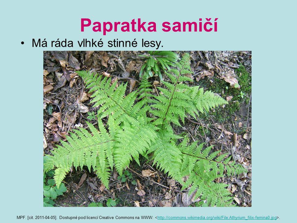 Papratka samičí Má ráda vlhké stinné lesy.