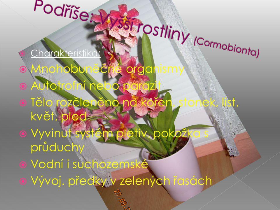 Podříše: Vyšší rostliny (Cormobionta)