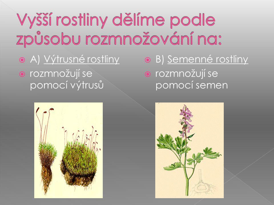 Vyšší rostliny dělíme podle způsobu rozmnožování na: