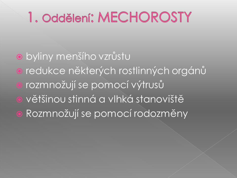 1. Oddělení: MECHOROSTY byliny menšího vzrůstu
