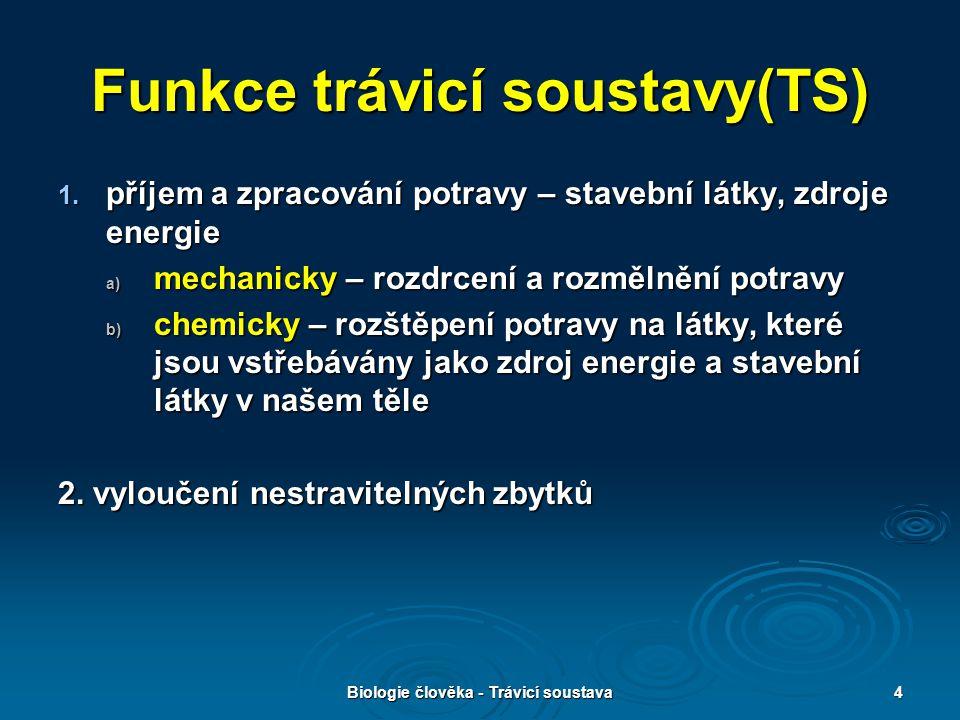 Funkce trávicí soustavy(TS)