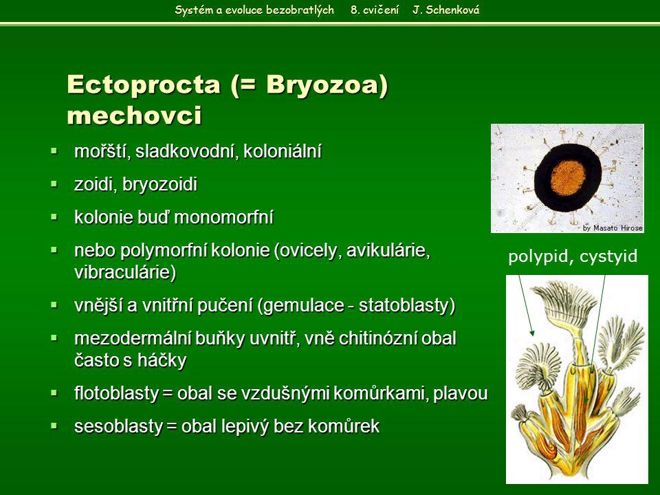 Ectoprocta (= Bryozoa) mechovci