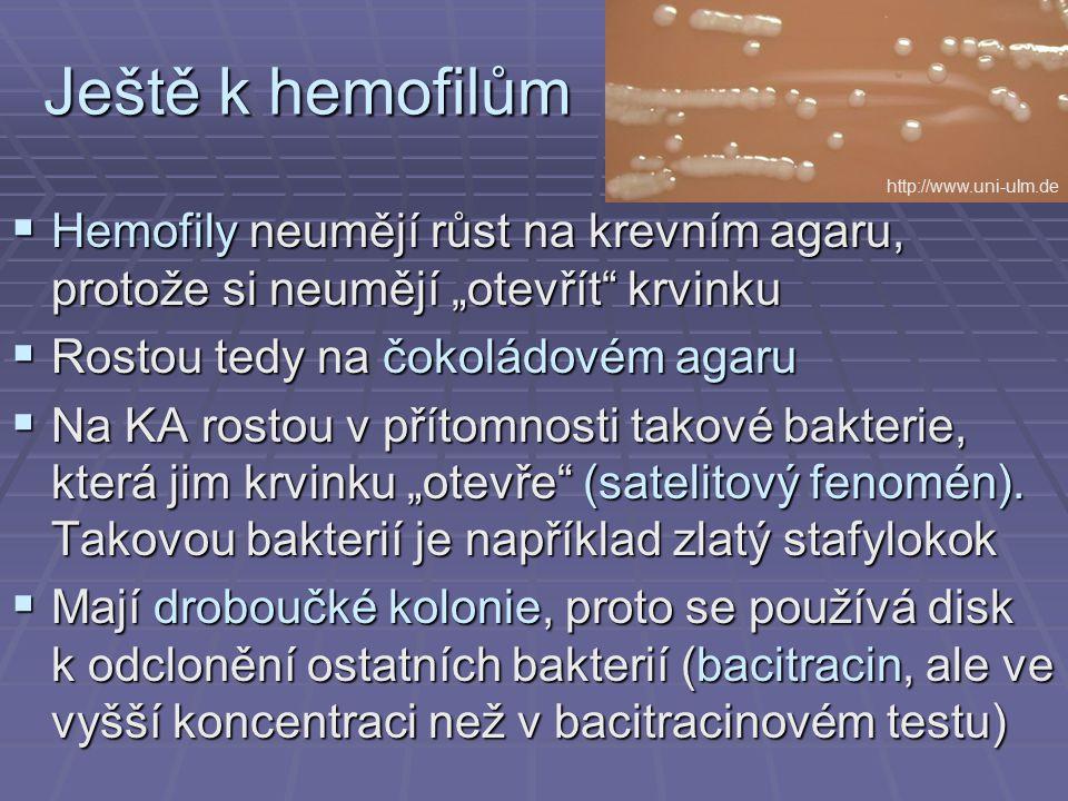 """Ještě k hemofilům http://www.uni-ulm.de. Hemofily neumějí růst na krevním agaru, protože si neumějí """"otevřít krvinku."""