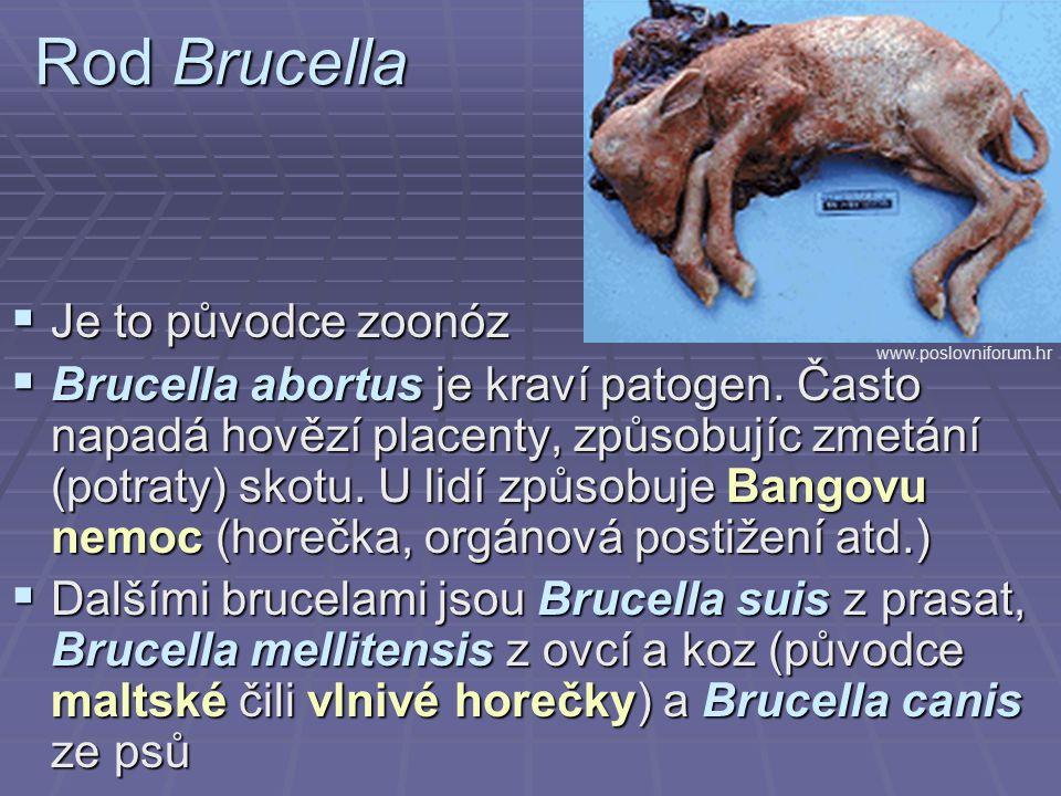 Rod Brucella Je to původce zoonóz