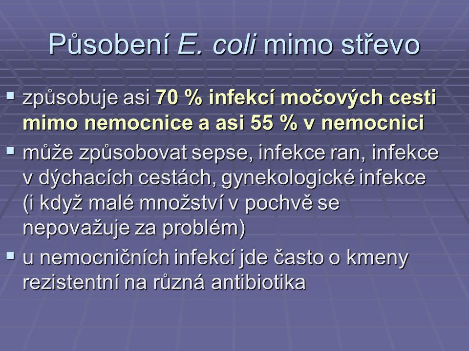 Působení E. coli mimo střevo