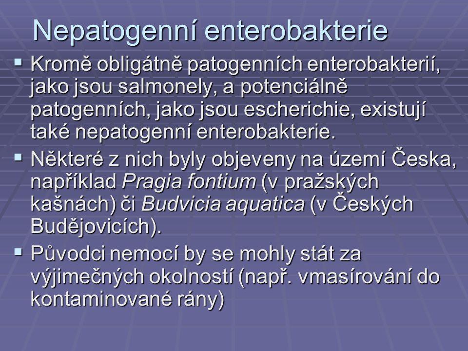 Nepatogenní enterobakterie