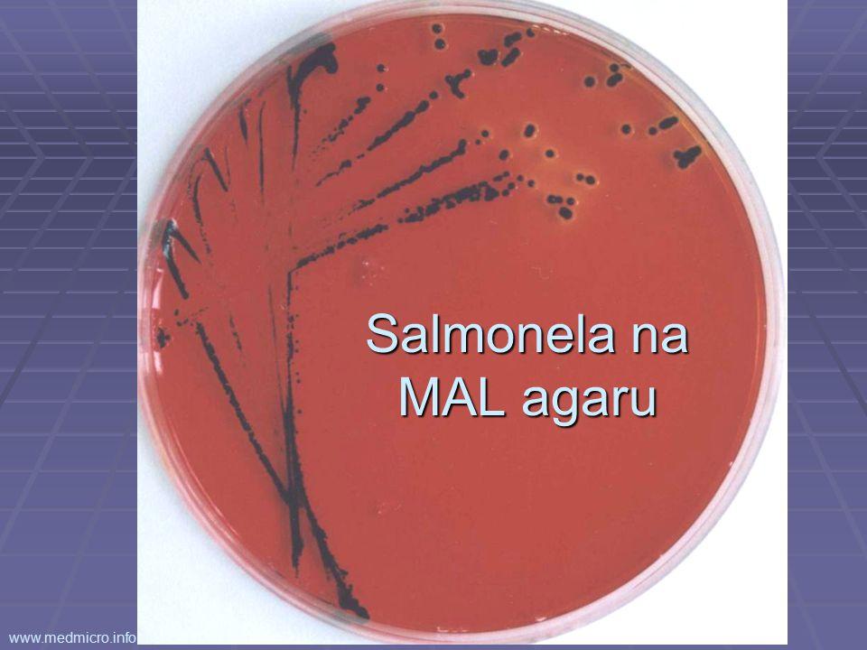 Salmonela na MAL agaru www.medmicro.info