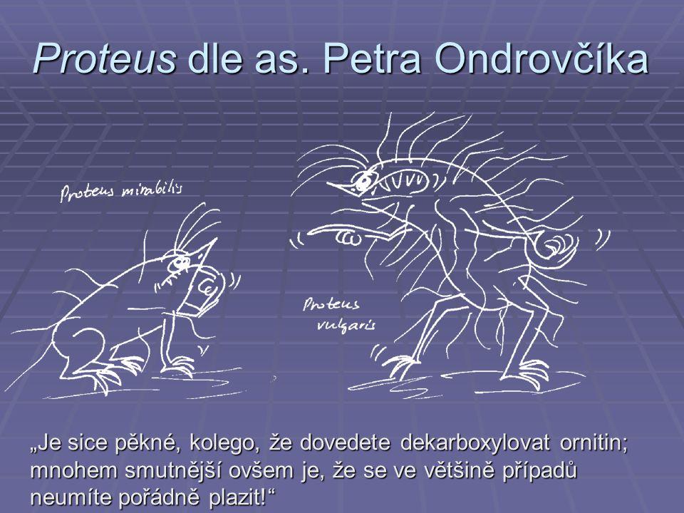 Proteus dle as. Petra Ondrovčíka