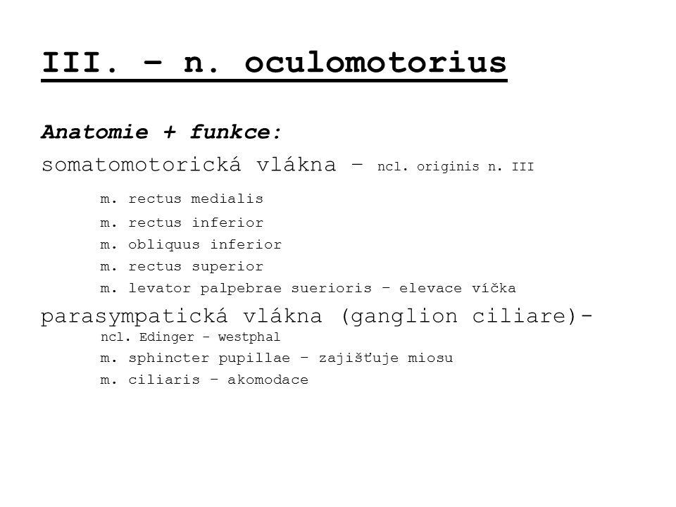 III. – n. oculomotorius Anatomie + funkce: