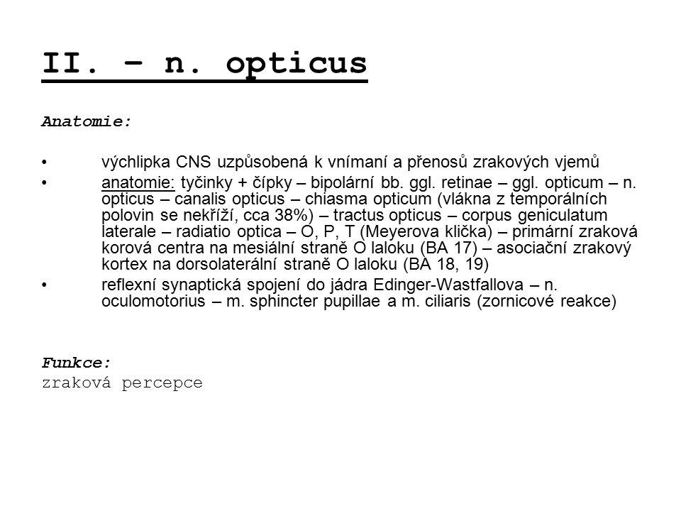 II. – n. opticus Anatomie: