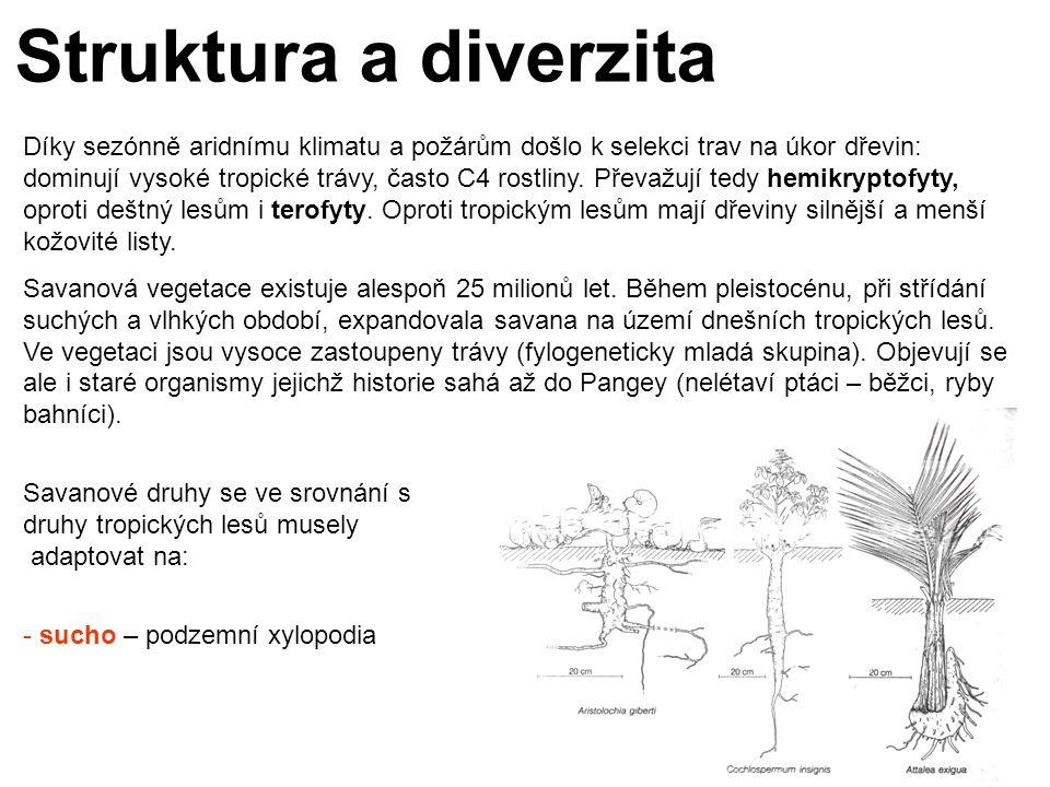 Struktura a diverzita