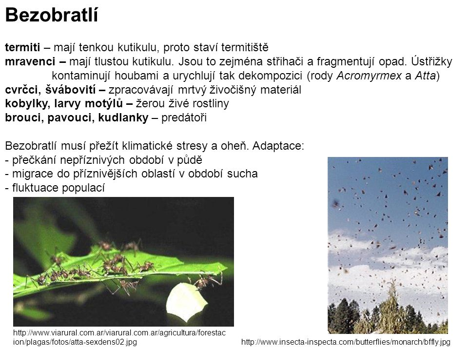 Bezobratlí termiti – mají tenkou kutikulu, proto staví termitiště