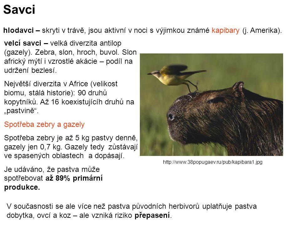 Savci hlodavci – skryti v trávě, jsou aktivní v noci s výjimkou známé kapibary (j. Amerika).