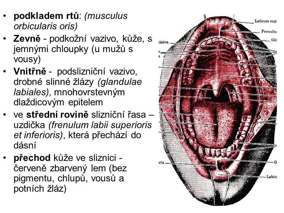 podkladem rtů: (musculus orbicularis oris)