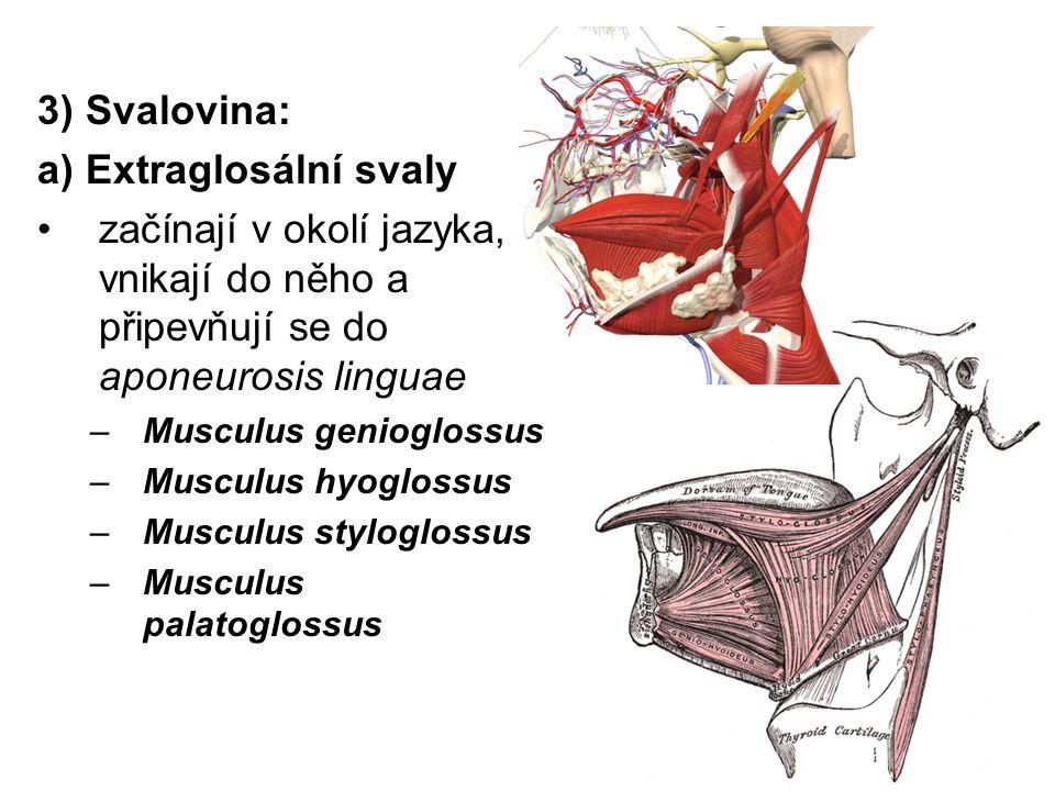 a) Extraglosální svaly
