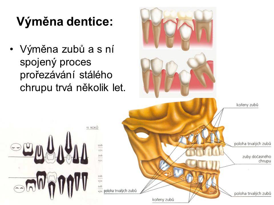 Výměna dentice: Výměna zubů a s ní spojený proces prořezávání stálého chrupu trvá několik let.