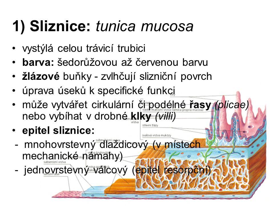 1) Sliznice: tunica mucosa
